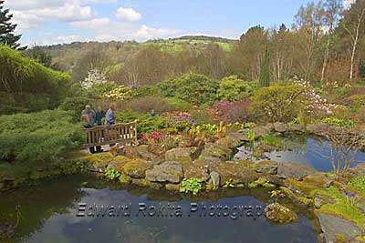 Lea Gardens in Derbyshire and the Peak District - thousands of photographs at http://www.derbyshire-photographs.co.uk